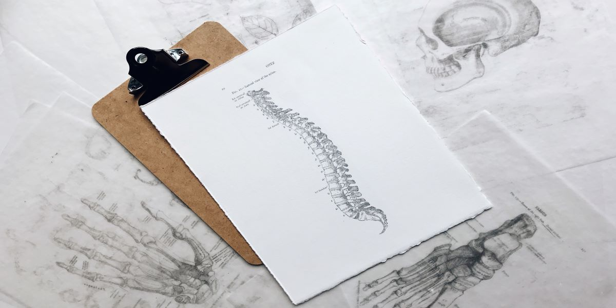 Chiropractic Care | Back Blueprint | Surrey 152St Physiotherapy & Sports Injury Clinic